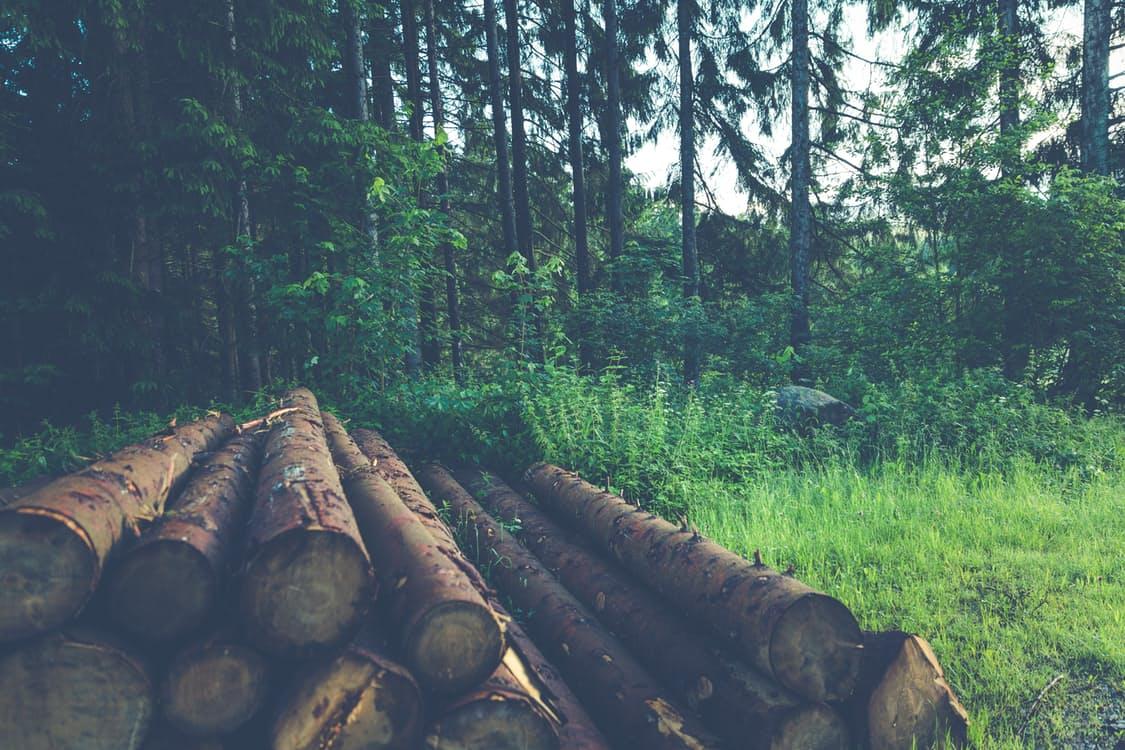 Shipment Tracker Prevents Illegal Logging